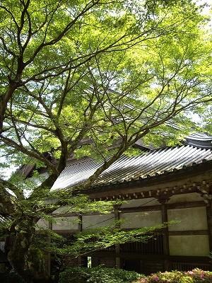 大雄山新緑20090620