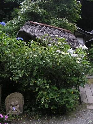 阿弥陀寺境内2-20090620