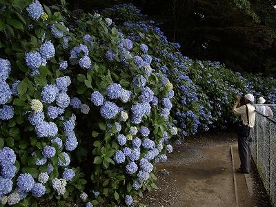 裏山3-20090627