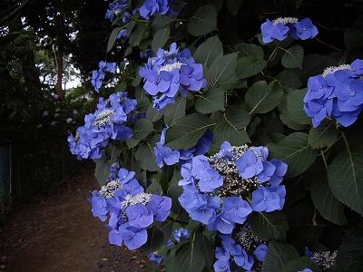 裏山4-20090627