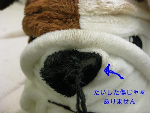 ごんちゃん2