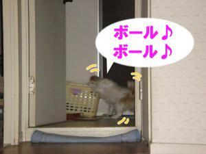 DSC01507_convert_20090710194220.jpg