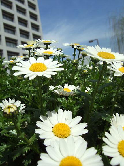 平和台のお濠の花
