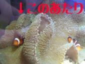 20050220164034.jpg