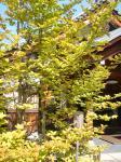 コピー ~ 2008.10.奈良・京都 043
