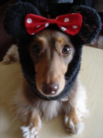 ジャムマウス1