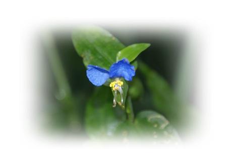 DSC01000露に濡れた花