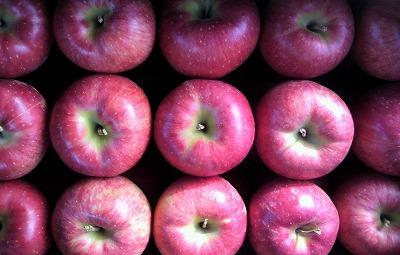 りんご2009101411280001