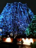 1214_tree.jpg