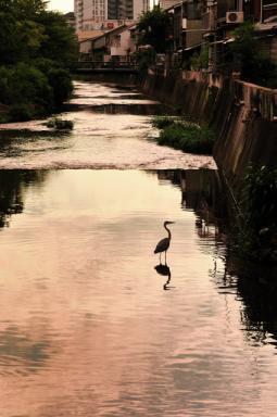 船場川の夕景
