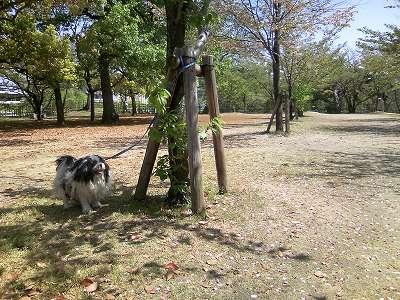 お城の葉桜とジャッキー1