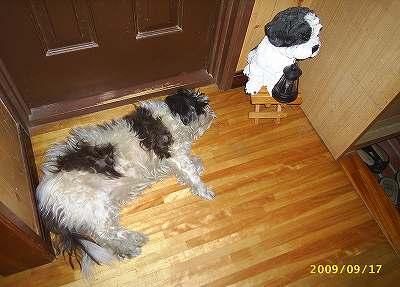 パリサイ犬(掟中心主義の犬)の僕