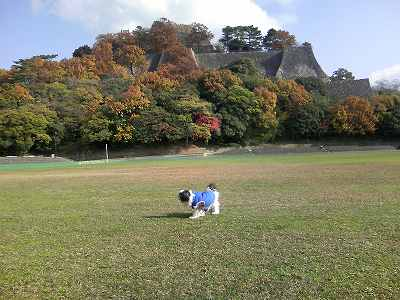 丸亀城の城内グランドにて