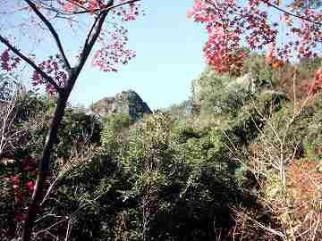 shodoshima014.jpg