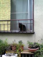 毎朝見る猫。