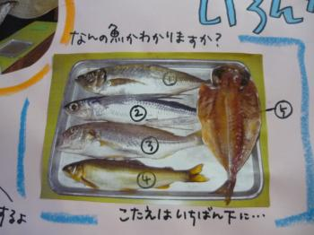 お魚いくつ知ってる?