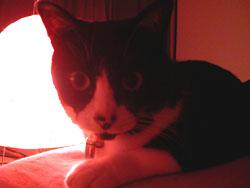 night cat2