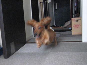 走るチョコちゃん3