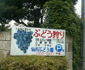 ぶどう狩00.JPG