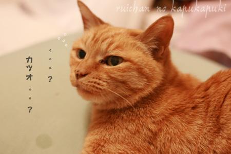 081026_rui_inemuri_003.jpg