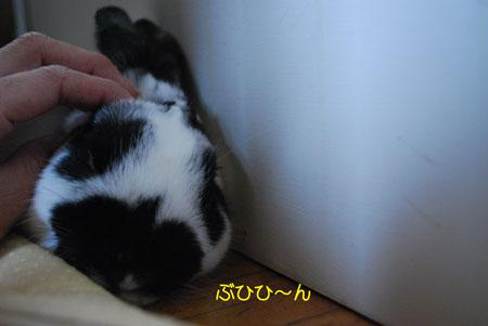 DSC_0008_20090830091714.jpg