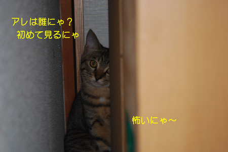 DSC_0011_20090830091714.jpg