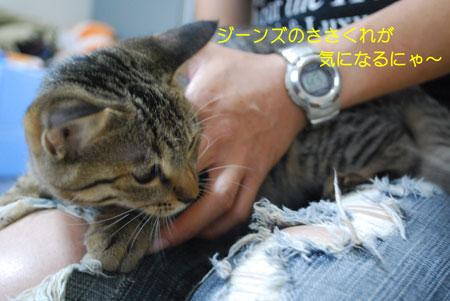 DSC_0017_20090830091714.jpg