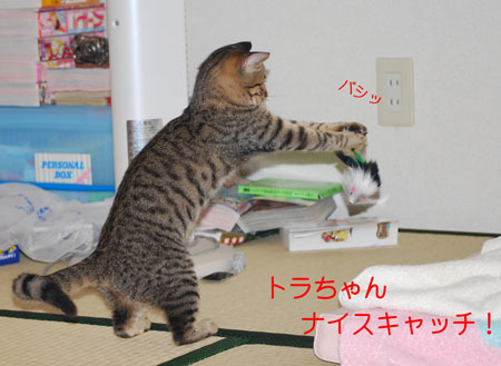 DSC_0030_20090830091713.jpg