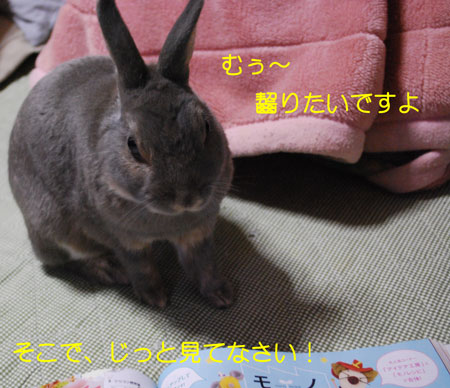 DSC_0032_20090826224337.jpg