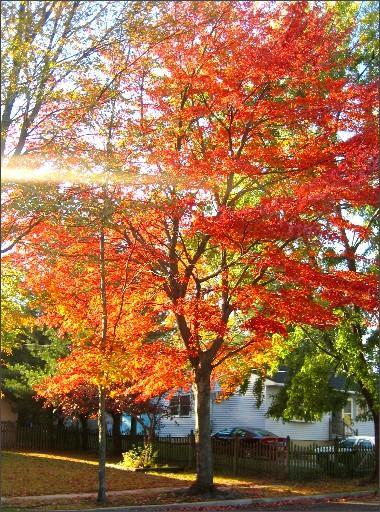 fierytree