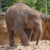 081027-elephant.jpg