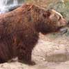 081111-bear.jpg