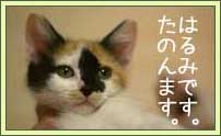 081119-harumi_.jpg