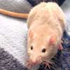 081127-mouse.jpg