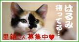 banner_harumi.jpg