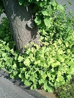 木の根元から葉が湧き出しています