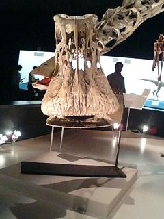ニジェールサウルス2