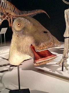 ニジェールサウルス3