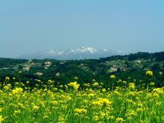 菜の花越しの守門岳