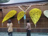 菊の花までヤンキーなリーゼント風である事にショックを受けて、眉をしかめるお姉さま方。