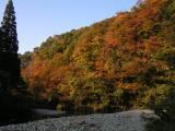 五十沢キャンプ場付近の山はイイ感じの紅葉。