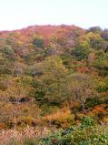 三国川ダム付近の山も紅葉真っ盛り