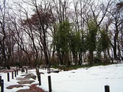 初雪の越路もみじ園_02