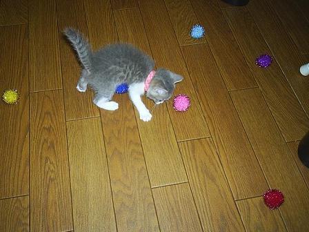 子猫って・・・