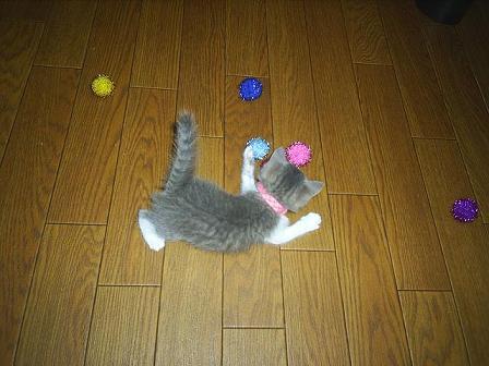 子猫って・・・2