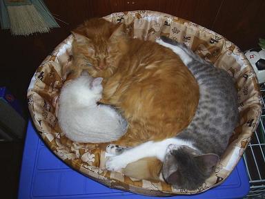 ぎゅうぎゅう猫詰め 1