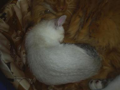 ぎゅうぎゅう猫詰め2