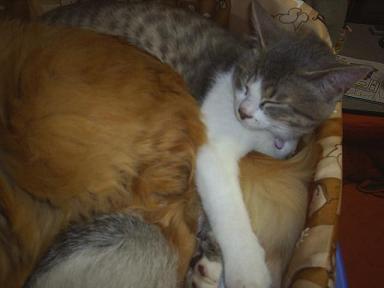 ぎゅうぎゅう猫詰め3