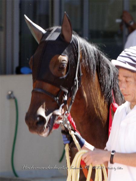 Hachimandaibo8081009_054H