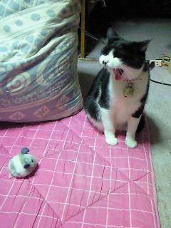クロちゃんとブルブルネズミ